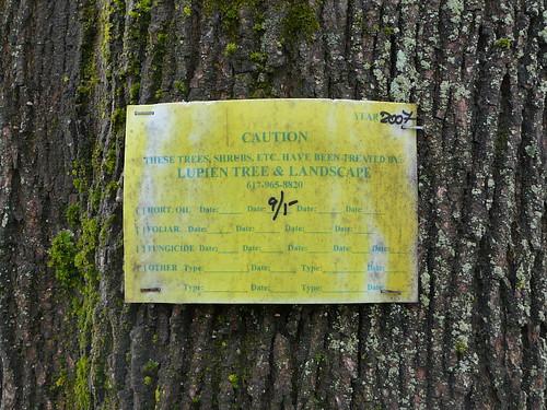 Beware of treated trees