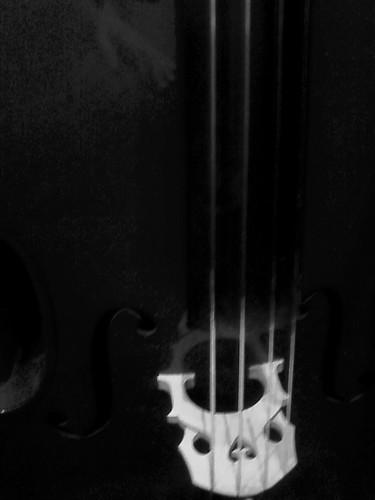 Cello closeup