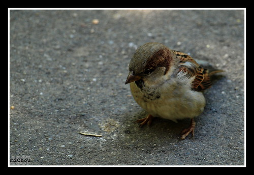 Little feathered friend