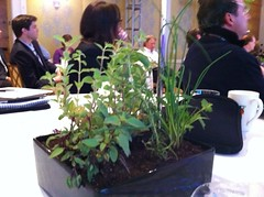 Small things: centerpieces made of herbs, go from hotel ballroom to garden #onef by pahlkadot