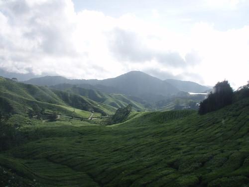 Teh Field - BOH