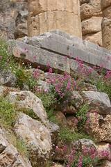 Détail du temple d'Apollon - Delphes