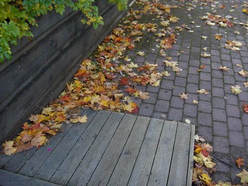 Wind-blown Leaves