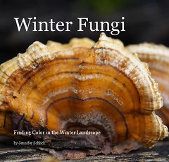Winter Fungi Book Cover