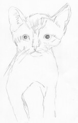 Cute kitten, drawn live on April 13, 2010 (sketch 1)