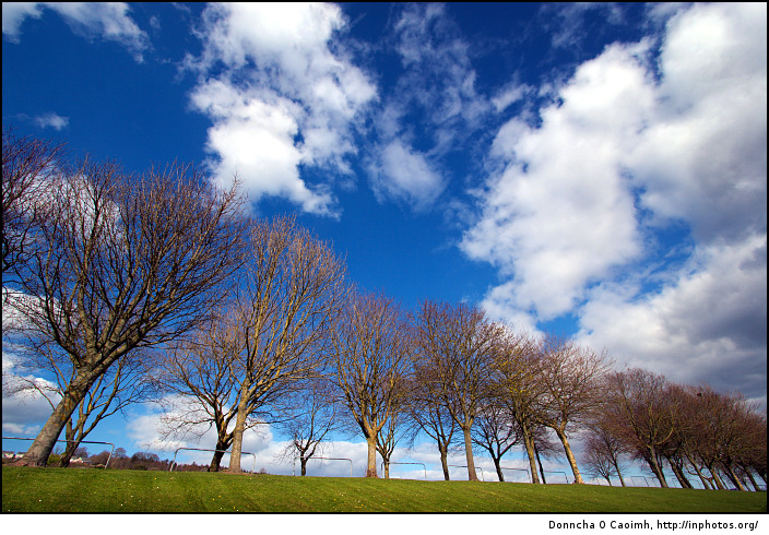 Trees on the Marina