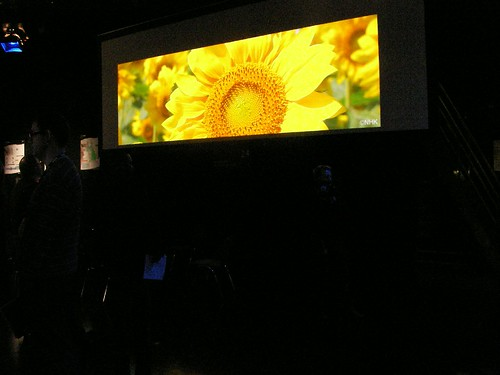 Sunflower projected at 4k
