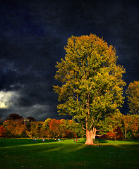 Before The Storm (.: Philipp Klinger :.) Tags: park autumn light sky storm tree green fall texture grass kids clouds germany deutschland football hessen frankfurt soccer meadow dramatic hesse grneburg goldenphotographer photofaceoffwinner goldstaraward dcdead