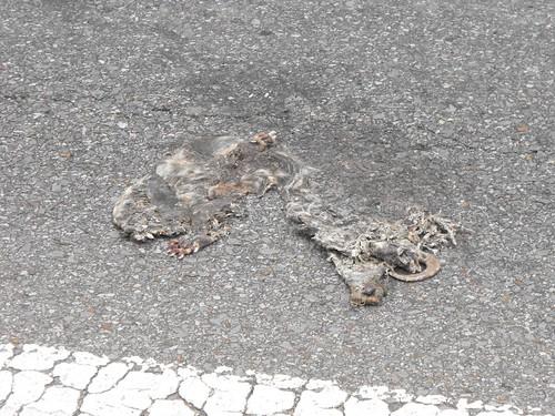 Really flat roadkill