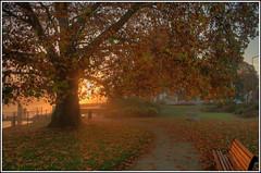 fallen leaves, standing tree