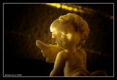 Angel del crepusculo