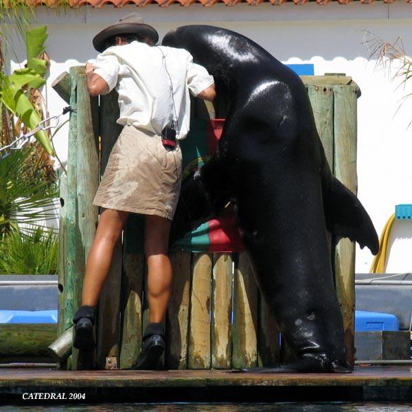 festa jardim zoologico:Ir ao Jardim Zoológico de Lisboa era essencialmente- e talvez ainda