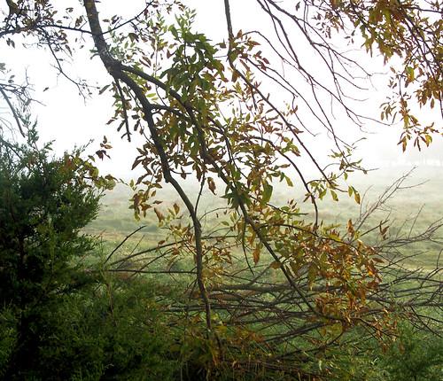 autumn branch.jpg