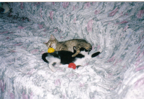 Stella e batuffolo - 2002
