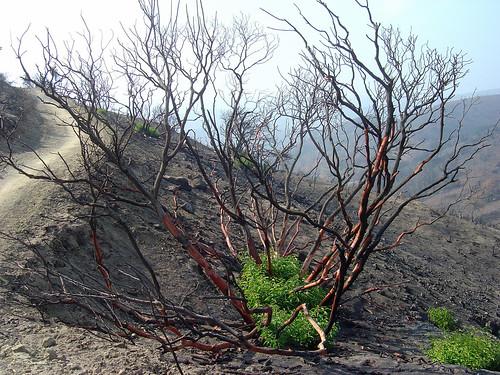 oaks-regrowth-plant