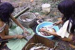 La Salud de los Matsiguengas del bajo Urubamba