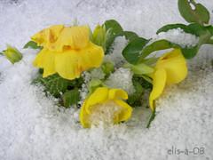 vinter og vår