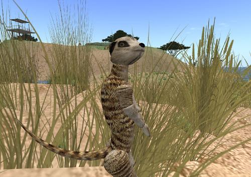 AI Meerkat at Virtual Africa