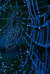 Web of Beauty 3 - Joe Houghton