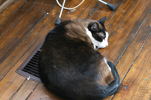 Cat on furnace duct