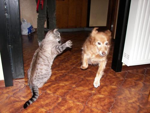E' guerra!!!!!!!!!!-Ovvero la vendetta di Geo-Cat attack