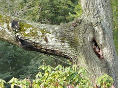 Two tree cavities