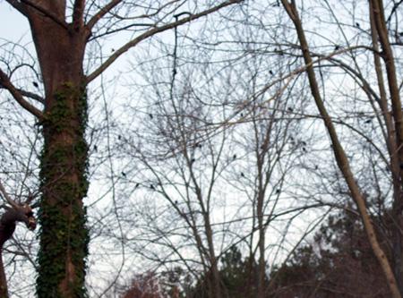 birdtrees_Jan28_08