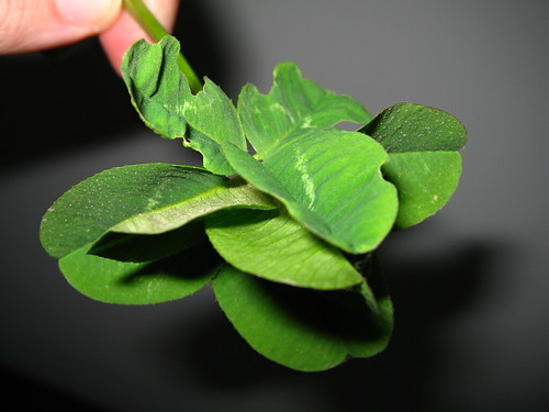 Trébol de 8 hojas