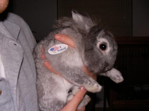 bunny votes