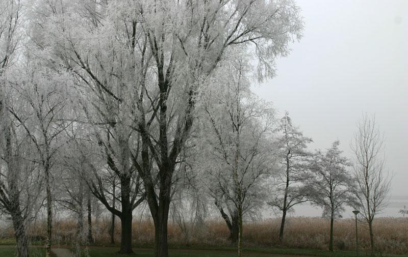 Uitsn.mist-IMG_8478a
