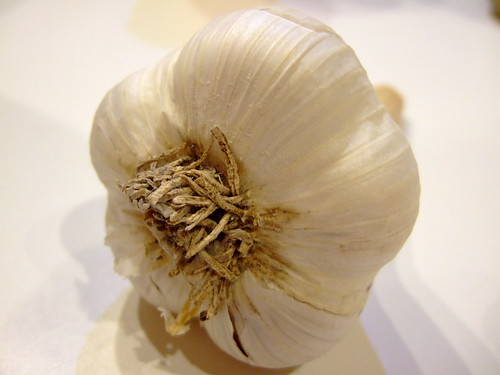 Bulb of Garlic