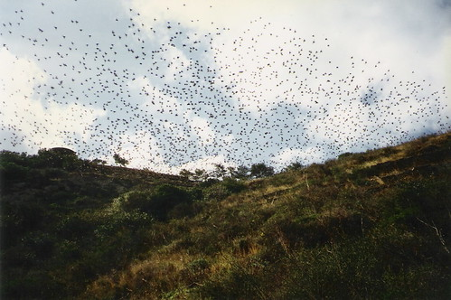 the birds of cadaques I