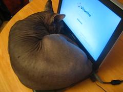 Photo d'Uthello sur mon clavier