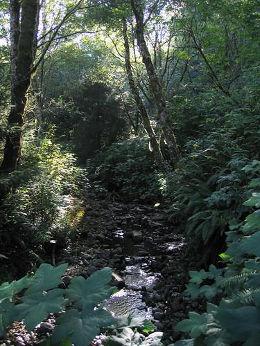Day 07 - Cape Perpetua Campground Creek