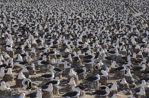 lugar de albatros