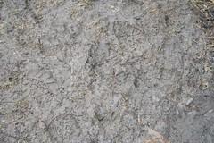 Spring Mudprints