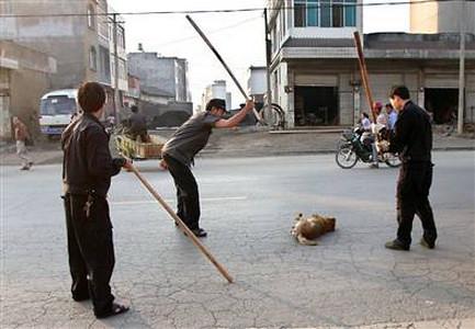 cane ucciso a bastonate da guardie cinesi