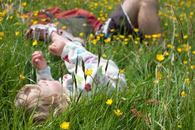 Lounging in a meadow