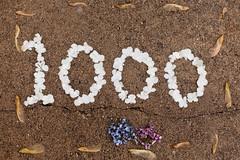 1000 FLICKR UPLOADS!!!!