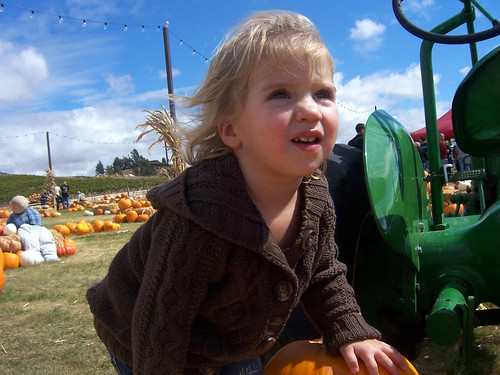 pumpkin patch 008