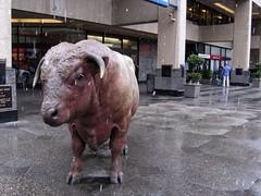 Freezing my bulls off