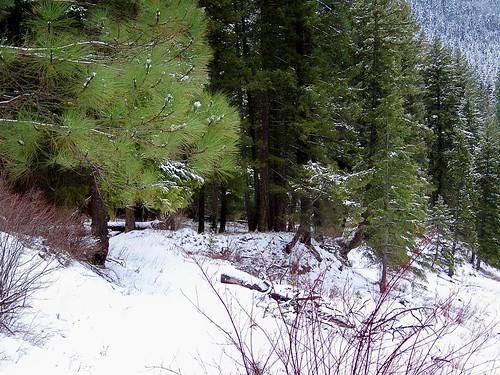 USFS trail #223