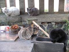 Today's Cat@20080106