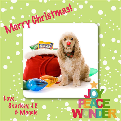 Merry Christmas from the JoyPeaceWonder Dog!