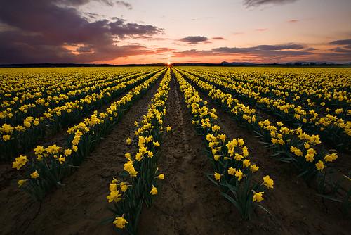 Spring Has Sprung by KPieper
