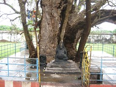 Swayambu (sand) Ankola Ganapathy  under the Eranzhil (Ankola) Tree