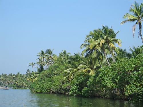 Canals i palmeres de Vypeen Island