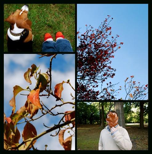 fall begins mosiac part 2