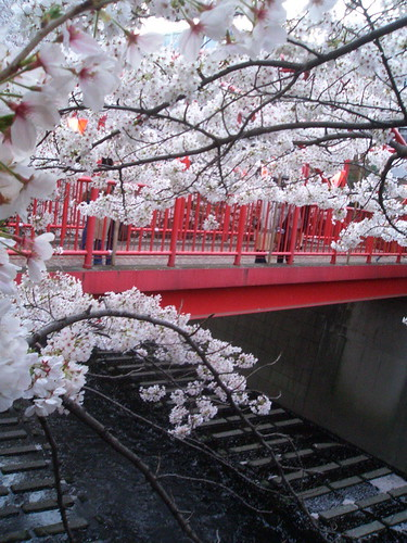 red bridge and lanterns