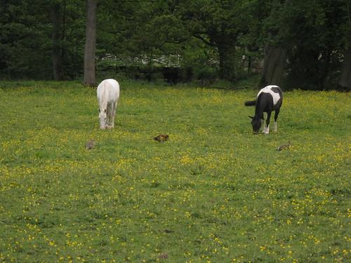 horses, pheasants, and rabbit